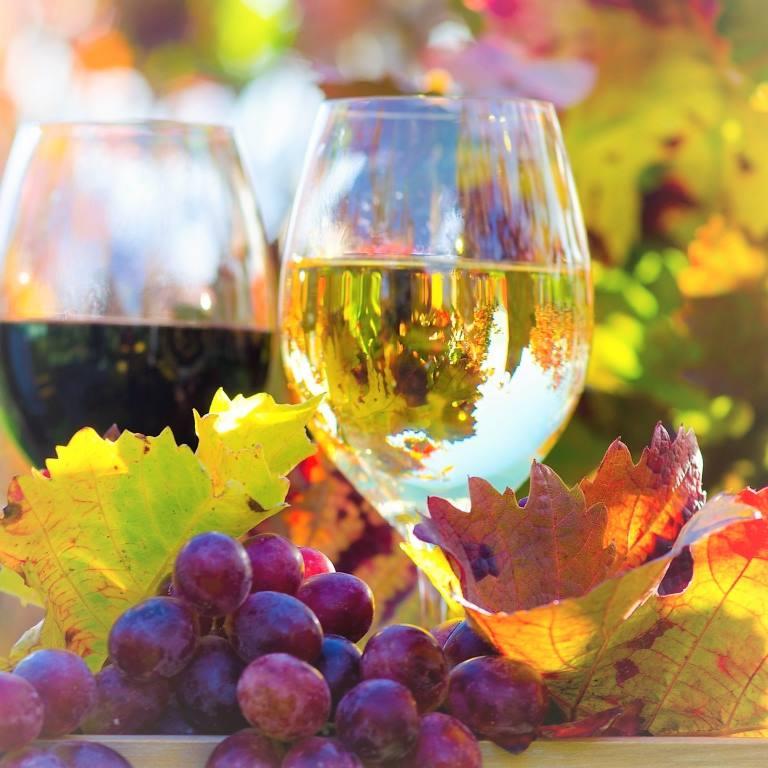 Genuss in der Pfalz: Weinprobe im Herbst :)